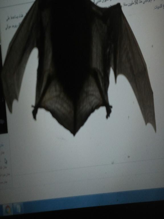 الحرية للخفافيش