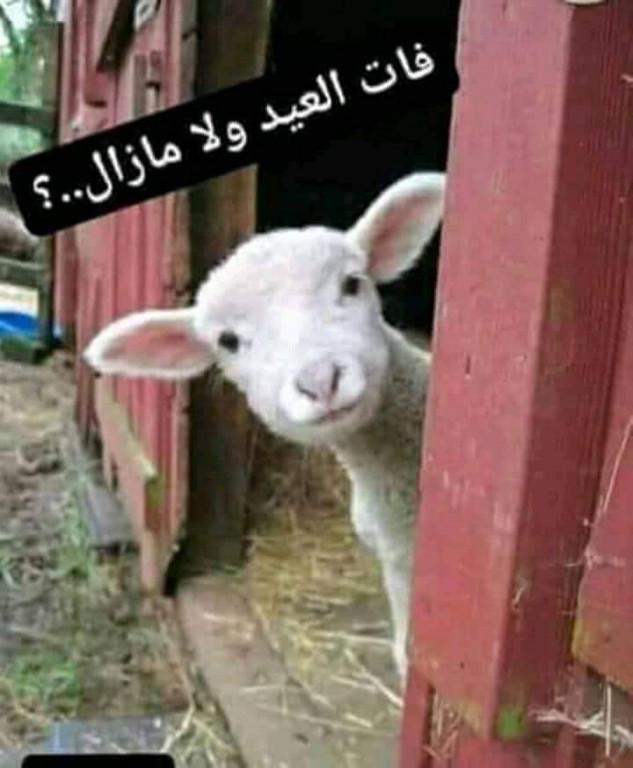عيد أضحى مبارك: عسى السعادة تغمر بيوت اليوميين