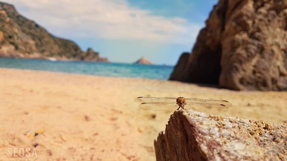 البحر وما أدراك ما البحر